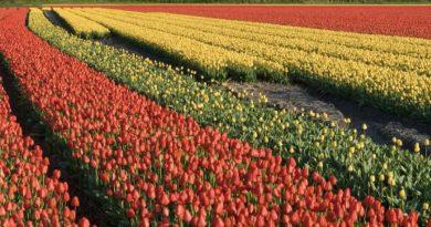 The Bulb Fields